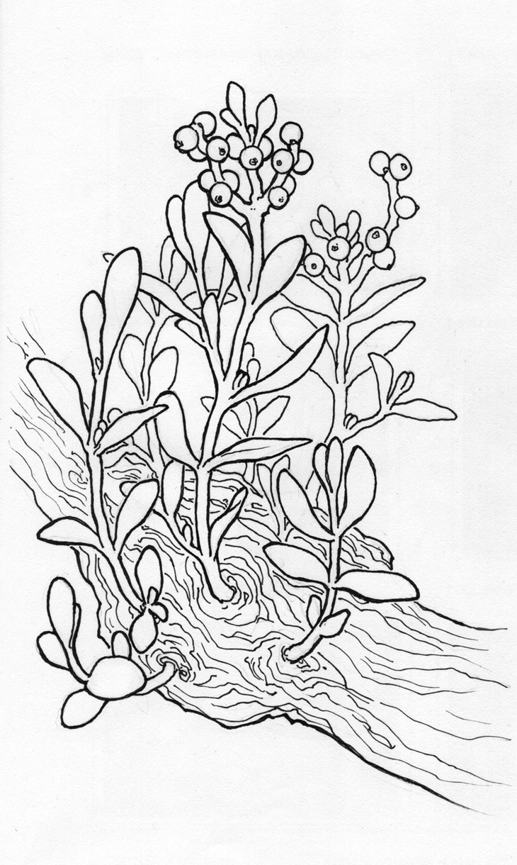 Holly Ivy Mistletoe Coloring Pages Coloring Pages Coloring Pages Mistletoe